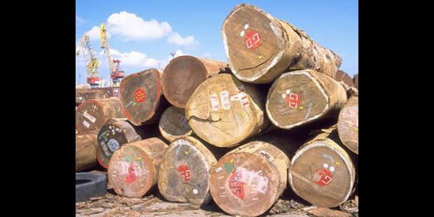La Belgique, passoire de bois tropicaux illégaux - La DH