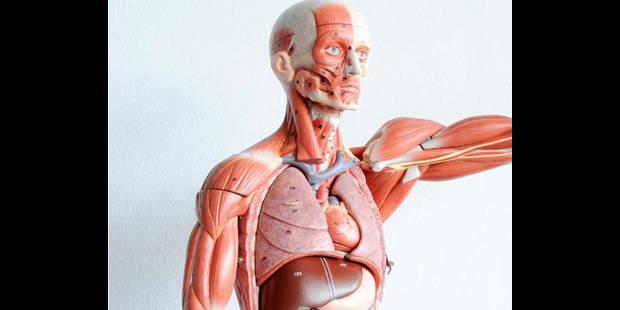 Pas de C4  pour le donneur d'organe - La DH