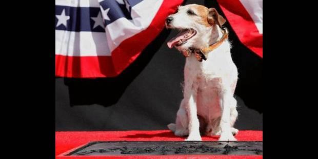 """Uggie, le chien de """"The Artist"""", laisse ses empreintes à Hollywood - La DH"""