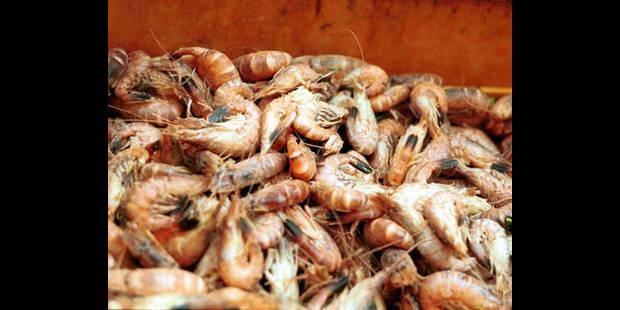Delhaize rappelle 3 lots supplémentaires de crevettes surgelées de sa marque - La DH