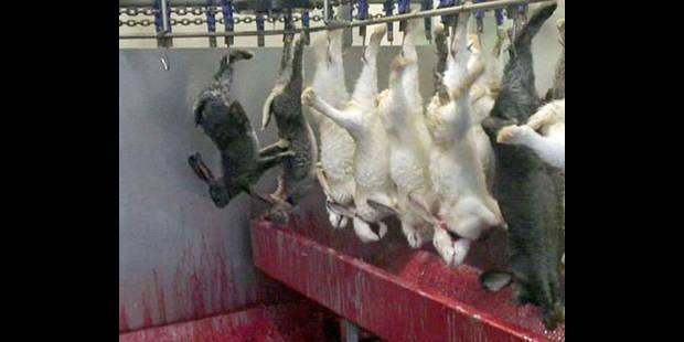 À Pâques, on sauve des lapins - La DH