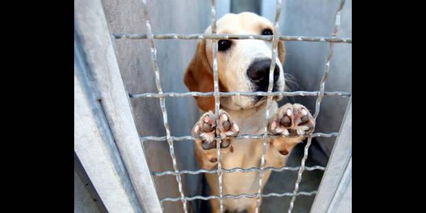 230 chiens recueillis - La DH