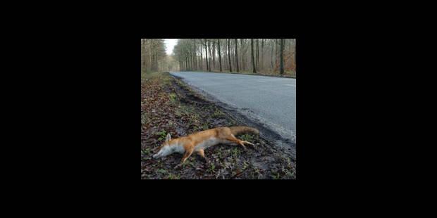Routes: comptage de cadavres d'animaux - La DH
