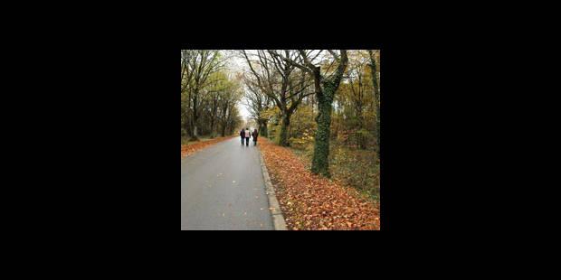 Record de température en novembre - La DH