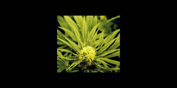 Un jeune adolescent sur trois a consommé du cannabis - La DH