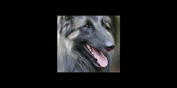 Les tueurs de chiens interpellés - La DH