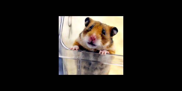 Capable de tout pour...son hamster - La DH