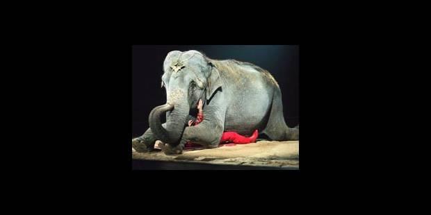 Lions et éléphants exclus des cirques! - La DH