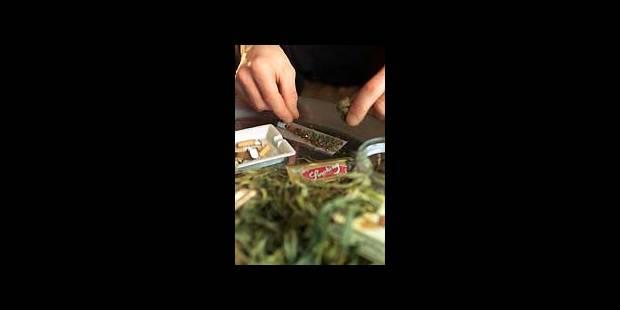 Saisie record de plants de Cannabis - La DH