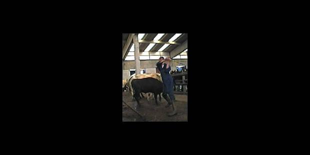 Les révélations de la caméra cachée dans les marchés aux bestiaux - La DH
