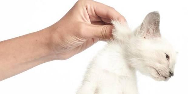 France:un chat enragé sème le trouble - La DH