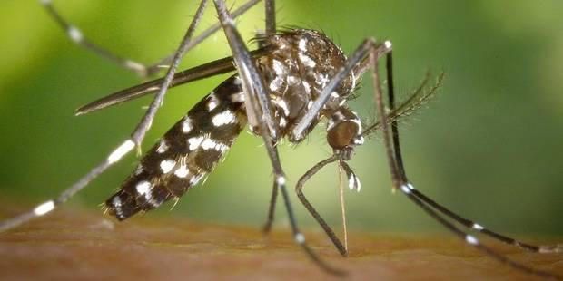La Belgique doit craindre le moustique tigre - La DH