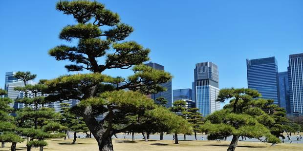 Violent séisme au Japon: le bilan passe à 17 blessés - La DH
