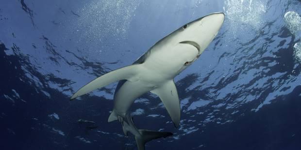 Le retour des requins sur les plages espagnoles? - La DH