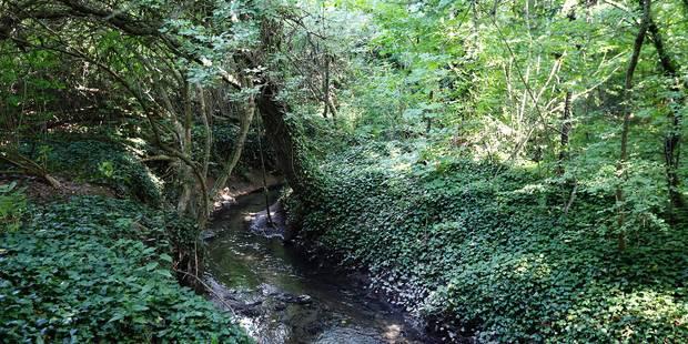 Un ruisseau en cale sèche - La DH