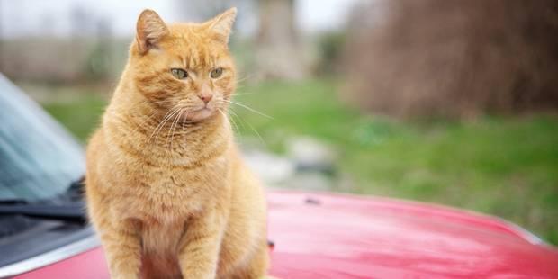 Appel à l'aide: l'asbl chats sans toit est en péril - La DH