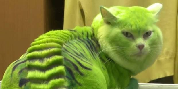 Voici le chat-dragon - La DH