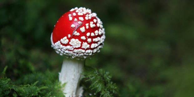 Des champignons hallucinogènes à Buckingham Palace - La DH