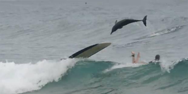 Des dauphins donnent une leçon à des surfeurs - La DH