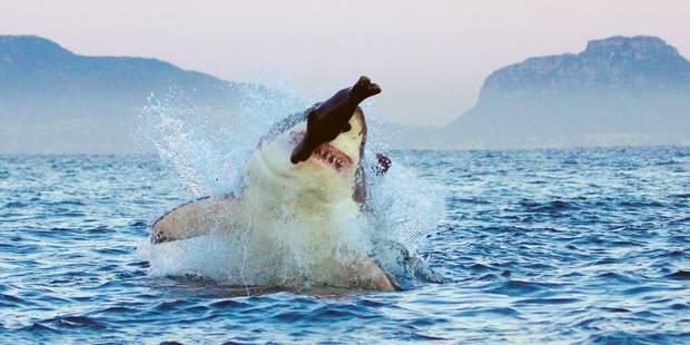 Un touriste tué par un requin en mer Rouge - La DH