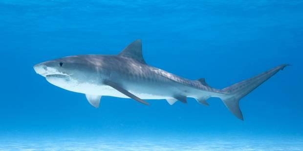 Une femme tuée par un requin à Hawaii - La DH