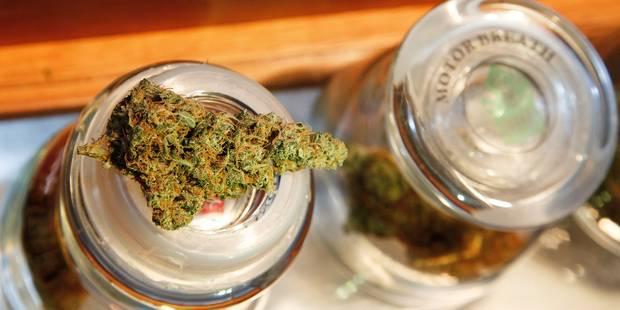 Une plantation de cannabis découverte suite à un incendie - La DH