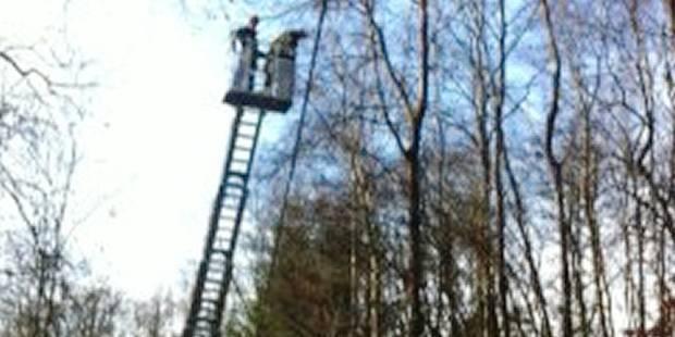 Waimes: des castors font tomber des arbres sur des câbles - La DH