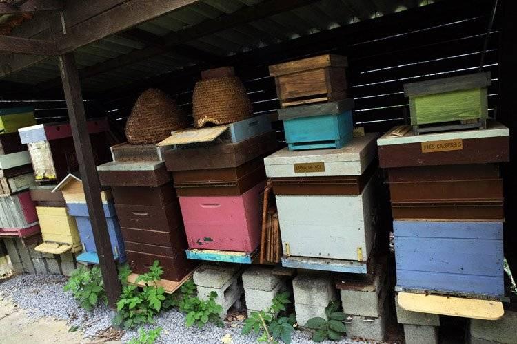 Et si vous parrainiez une ruche ? Pour soutenir les apiculteurs et manger du miel de qualité toute l'année. Infos : http://www.lapassiondumiel.be/fr/parrainage