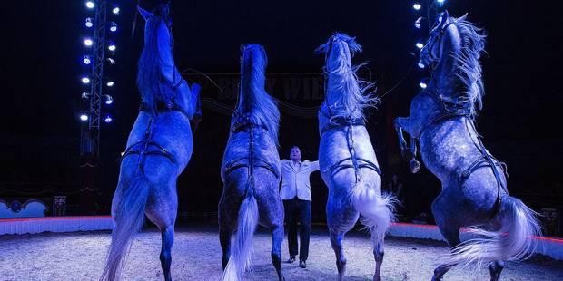 Les chevaux, rois du cirque - La DH