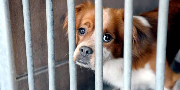 Charleroi: 2.600 chiens abandonnés en 2015 - La DH