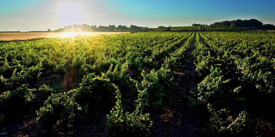 Concours: La DH invite ses abonnés à une soirée de dégustation des vins AOP et IGP du Languedoc - La DH