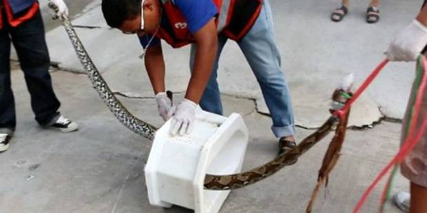 Thaïlande: un homme mordu au pénis par un python (VIDEO) - La DH