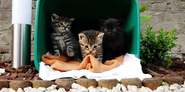 Dix chatons abandonnés par jour - La DH