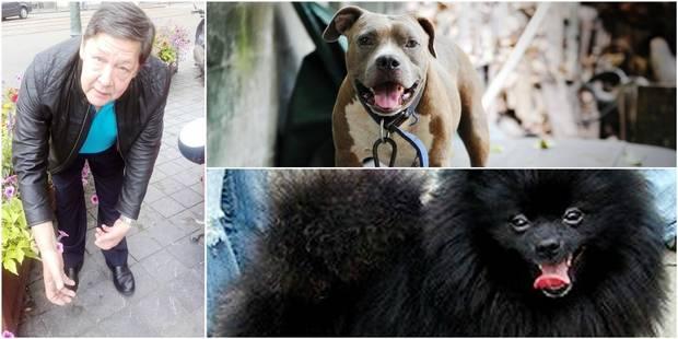 Un molosse tue cruellement un chien à la foire du Midi - La DH