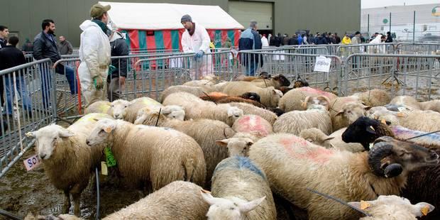 Fausses rumeurs sur la fête du mouton: le parti Islam crée la polémique - La DH
