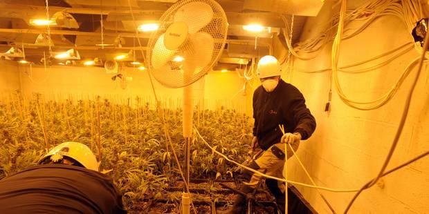 98.000 € de cannabis dans une maison inhabitée à Colfontaine - La DH