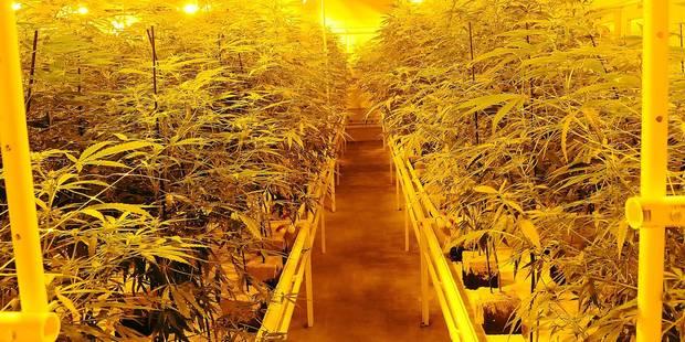 Herstal: 2.238 plants de cannabis aux Acec - La DH