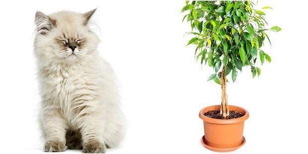Six mois de garantie sur votre ficus ou... votre chat - La DH
