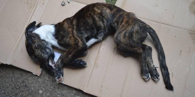 Boussu-en-Fagne: un chiot retrouvé mort de faim - La DH