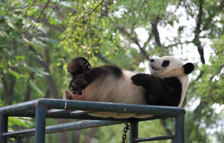 Un aquarium, un parc aquatique, un musée maritime mais aussi un immense zoo où les pandas ont l'air heureux de vivre...
