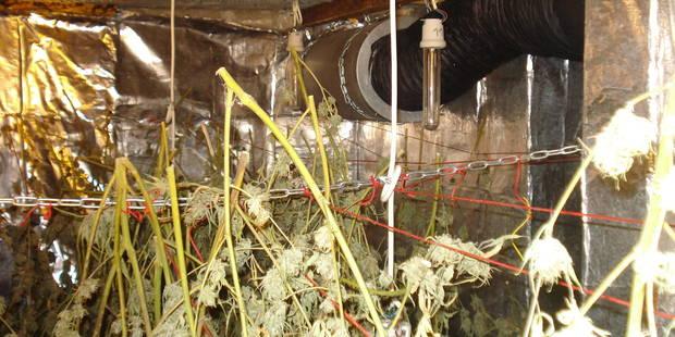 Saint-Ghislain: un cultivateur de marijuana arrêté par la police - La DH