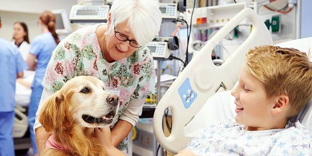 Les chiens, nos meilleurs alliés contre le cancer - La DH