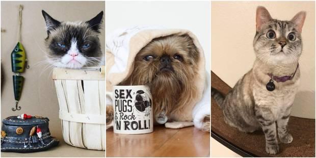 Digby, Nala, Darcy, etc. : ces animaux sur Instagram qui rendent heureux - La DH