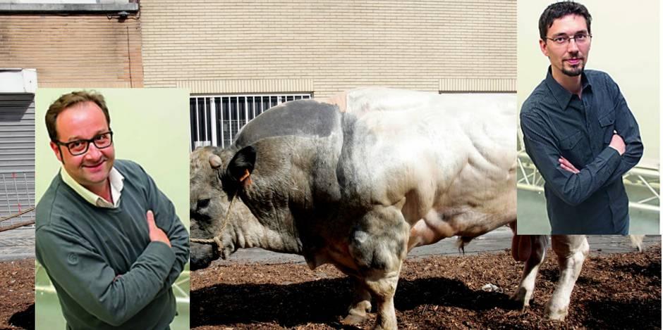Pour ou contre de la rédaction: le Blanc Bleu Belge est-elle une viande 'horrible' ? - La DH
