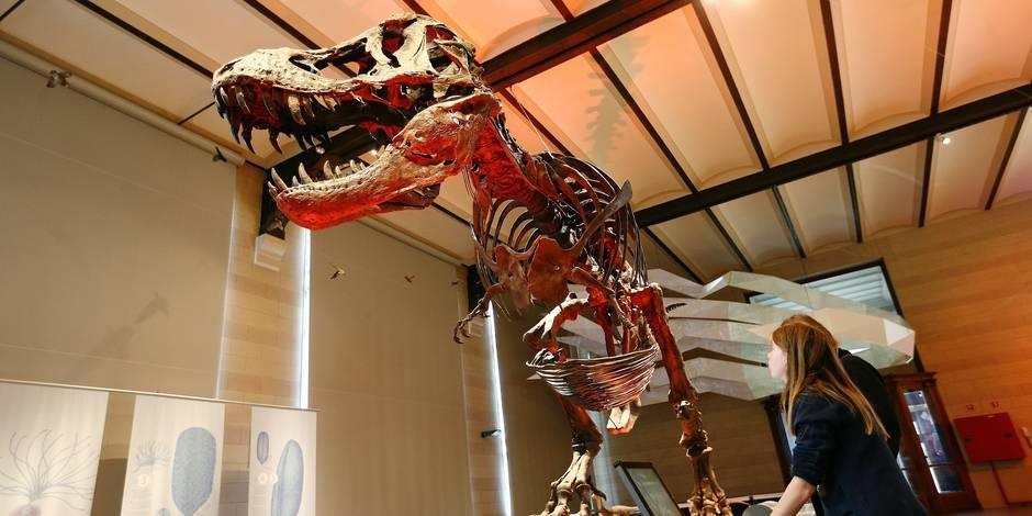 En visite au Musée des Dinosaures - La DH