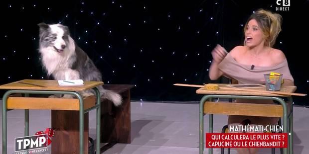 Capucine Anav humiliée par un chien en calcul mental... (VIDEO) - La DH