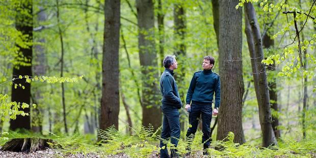La forêt de Soignes, un modèle de gestion durable - La DH
