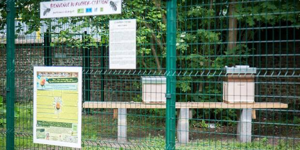 Bêtise humaine à Herve: des vandales renversent des ruches! - La DH