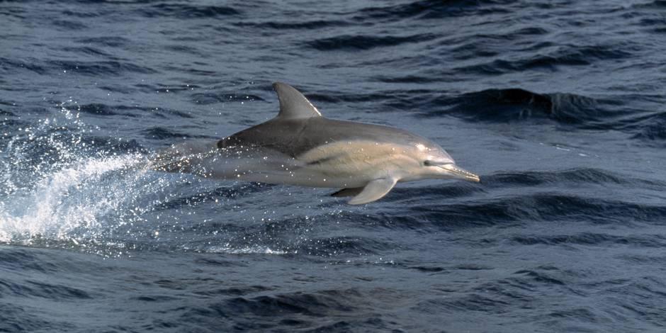 Des touristes tuent un bébé dauphin en voulant le prendre en photo