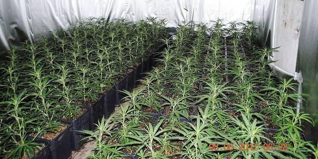 La Hulpe: Le cannabis poussait dans une villa cossue - La DH